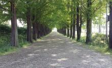 가로숲길을 걸으며